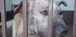 Walki psów - wpadli organizatorzy