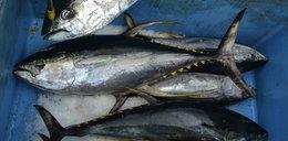 Tej popularnej ryby wkrótce już nie zjesz