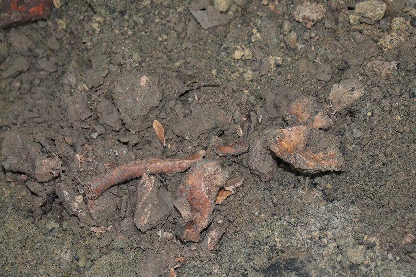 W fundamentach kamienicy z Oświęcimia odkryto ludzkie szczątki