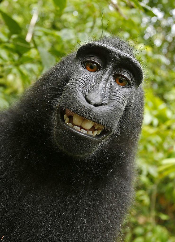životinje selfi01 foto Wikipedia