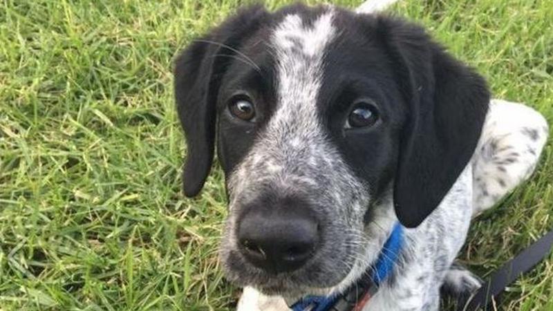Pies szkolony przez policję wybiegł na płytę lotniska. Zastrzelono go