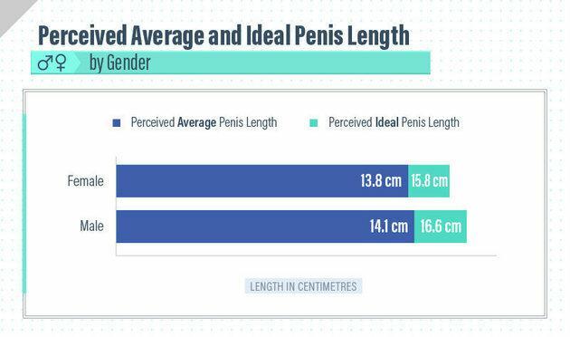 jak duży jest przeciętny ludzki penis