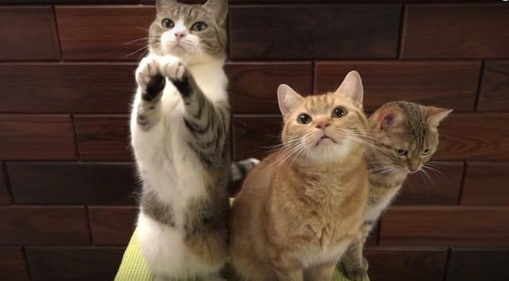 678205_macke-foto-youtube-10-cats