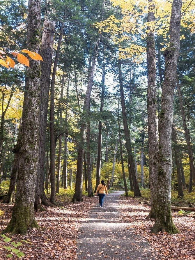 To kako zamišljate šumu u koju ulazite određuje vaše životne poglede