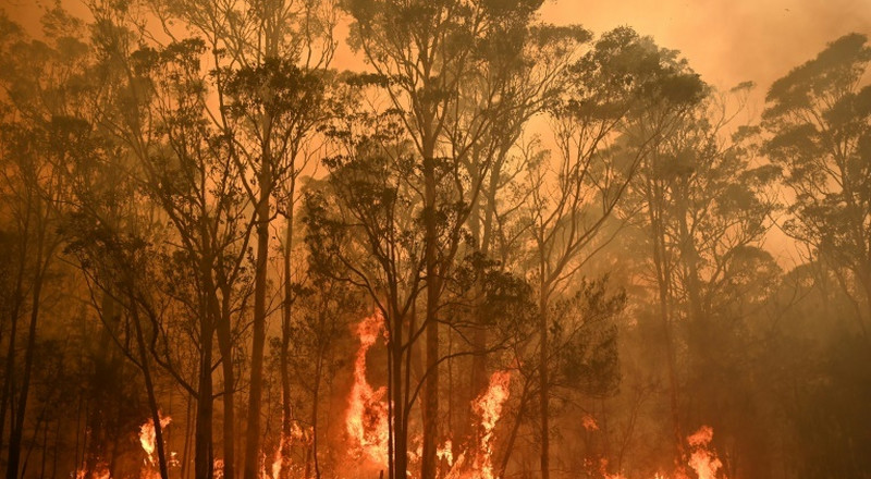Threatened species hit hard by Australia's bushfires
