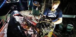 Wyłowili z wody martwego wieloryba. To, co w nim znaleźli, szokuje!