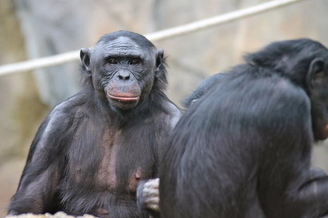 seks crnih majmuna veliki objeen penis porno