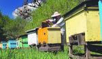Opština Prokuplje pomaže pčelarima