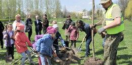 W Krakowie zasadzono 21 nowych drzew
