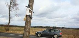 Co ta czarownica robi na drzewie?