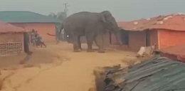 Słoń taranował wszystko na swojej drodze, zabił dwie osoby. Przerażające nagranie