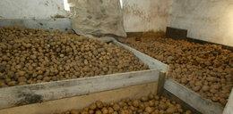 Całą rodzinę zabiły... ziemniaki!