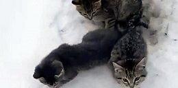 Czekała je pewna śmierć, on je uratował. To nagranie roztapia serce