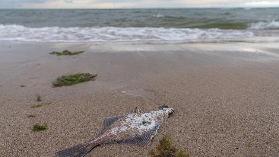 Bałtyk morze Bałtyckie plaża ryba ryby
