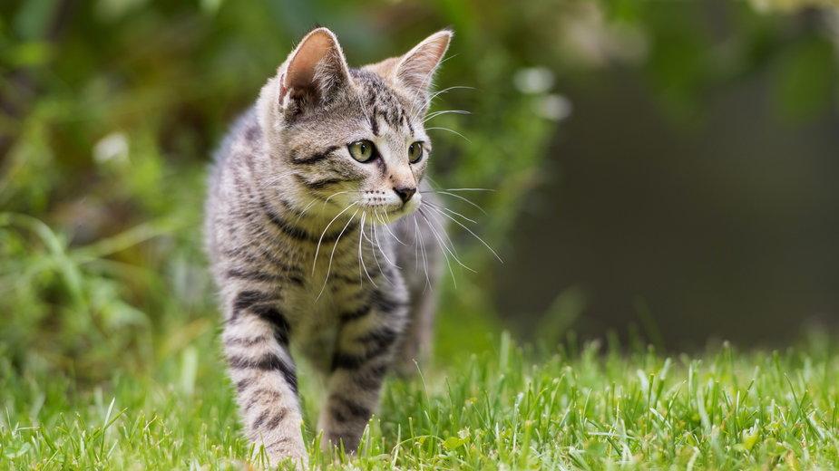 Aby zniechęcić kota do przychodzenia do ogrodu można posadzić rośliny, których koty nie lubią  - DoraZett/stock.adobe.com