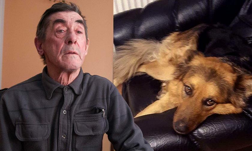 Zastrzelił psa z karabinu z lunetą: Pomyliłem go z lisem
