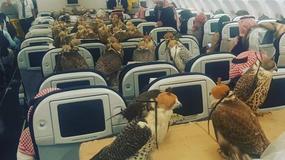 80 sokołów w samolocie. Każdy miał paszport i bilet. Kto za to zapłacił?