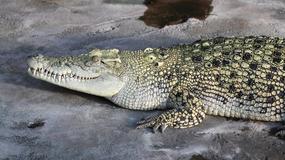 """""""Najgroźniejsze zdjęcie z wakacji"""" - turystka pozuje z krokodylem"""