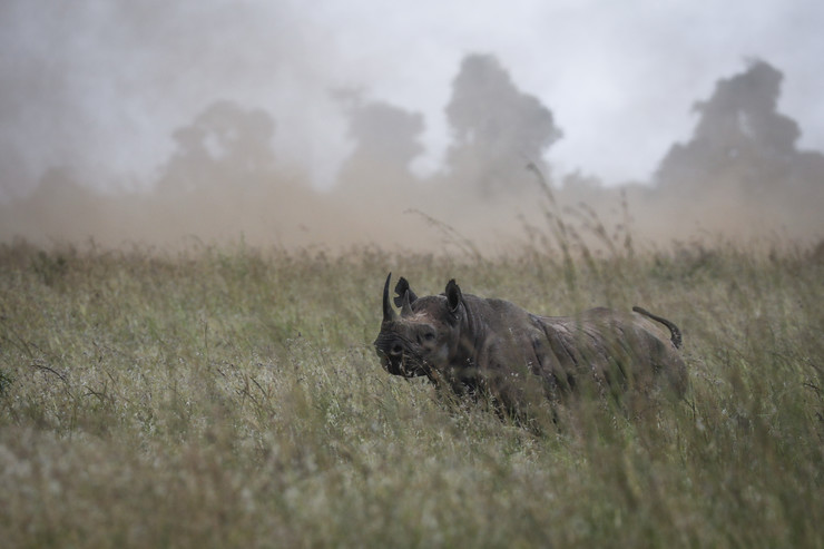 Crni nosorog EPA DAI KUROKAWA