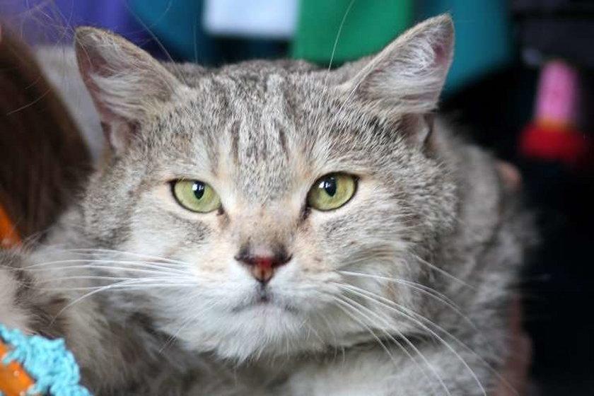 Tygodniowa gehenna kota Marcela!