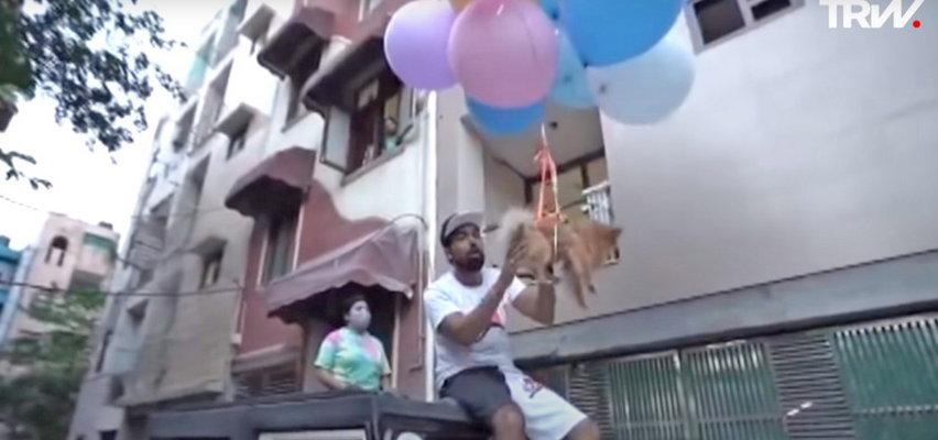 Youtuber przyczepił psa do balonów z helem i kazał mu latać. Został zatrzymany przez policję