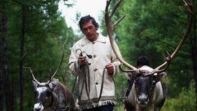 Pasterze reniferów uciekają przed cywilizacją