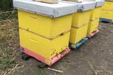 Lopovi oštetili pčelare za 150.000 dinara