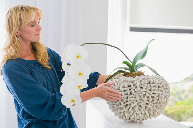Caka koja će oduševiti sve koji vole kućne biljke