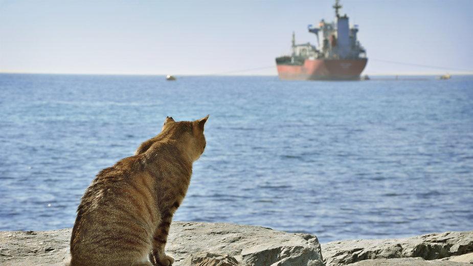 Kot płynął 19 dni, żywiąc się słodyczami i pijąc skraplającą się wodę