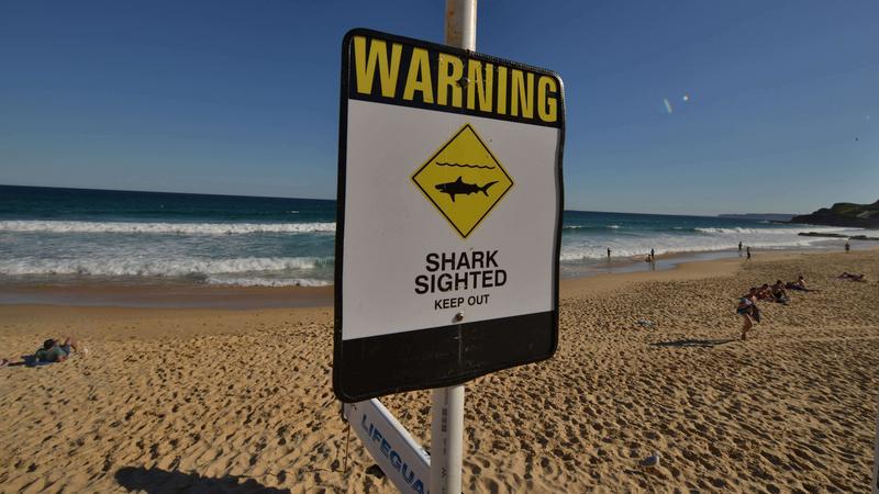 Drony wykrywające rekiny będą patrolowały plaże w Australii