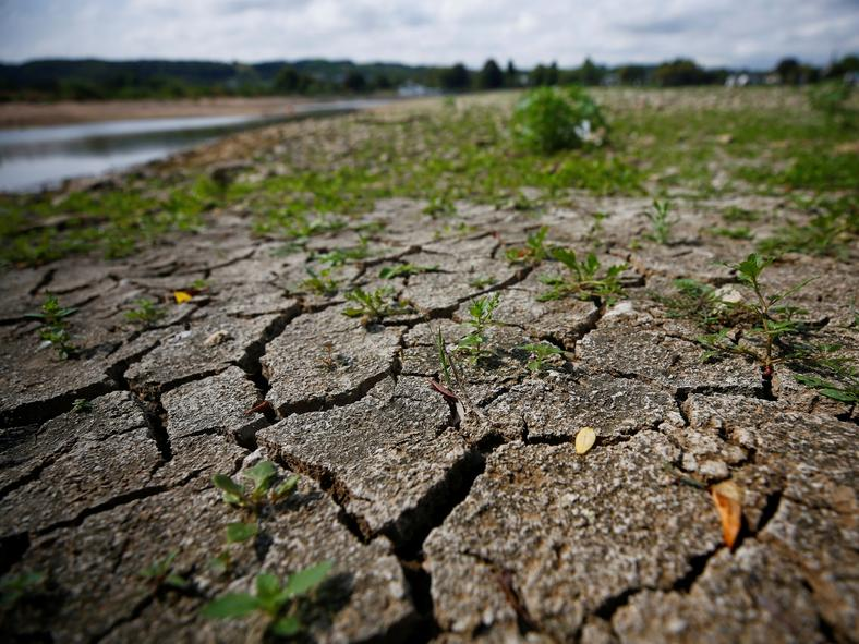 Plants sprout between the cracks of the dried out river bed of the Rhine in Rhoendorf near Bonn, Germany, August 17, 2018, as water levels reached a historic low level and freight vessels cannot sail fully loaded on the river.