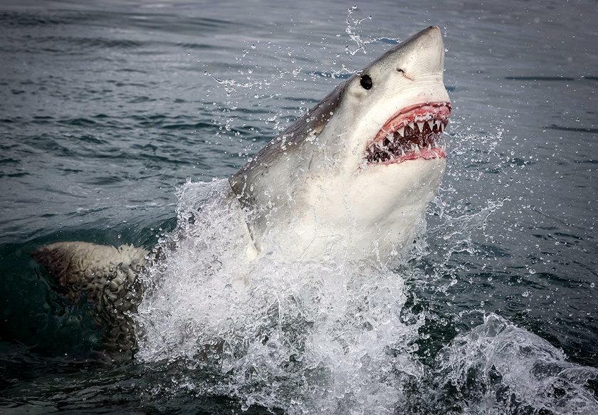 Ojciec bił rekina tak długo, aż wypuścił córkę. Dziewczyna straciła nogę