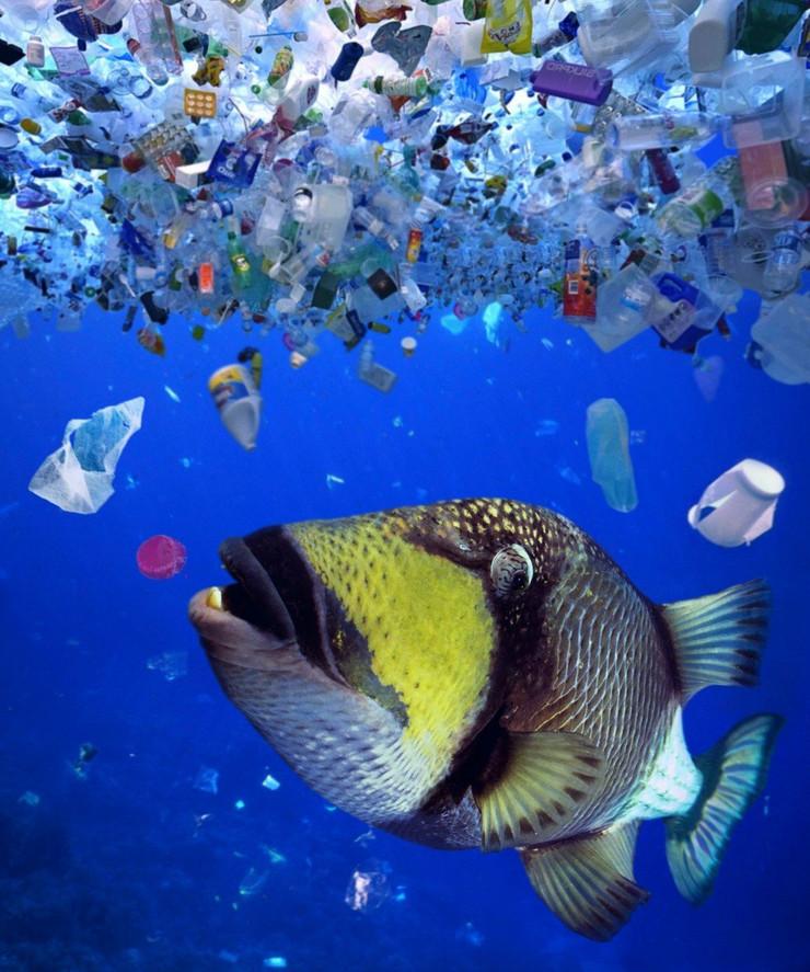 plastika okean zagađenje
