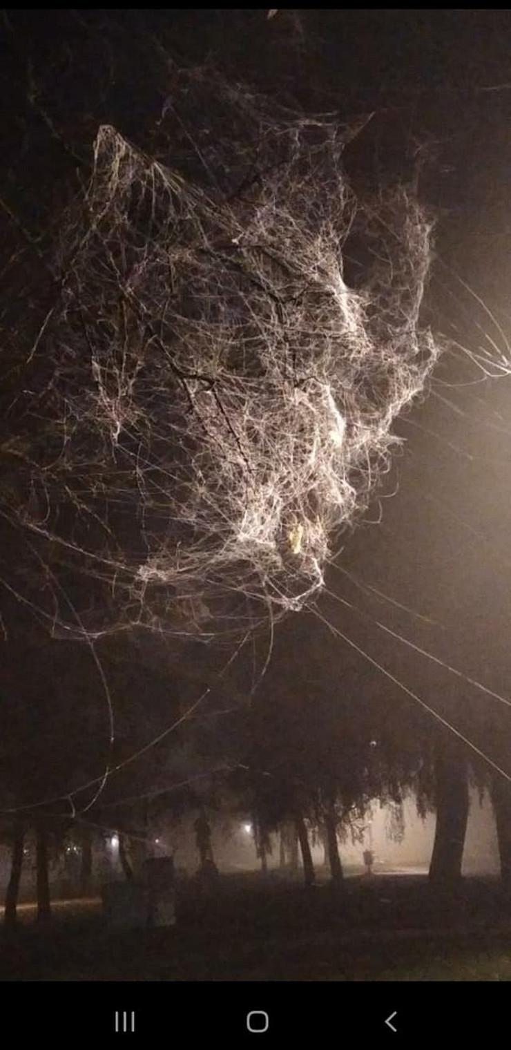 paučina sezona parenja paukova