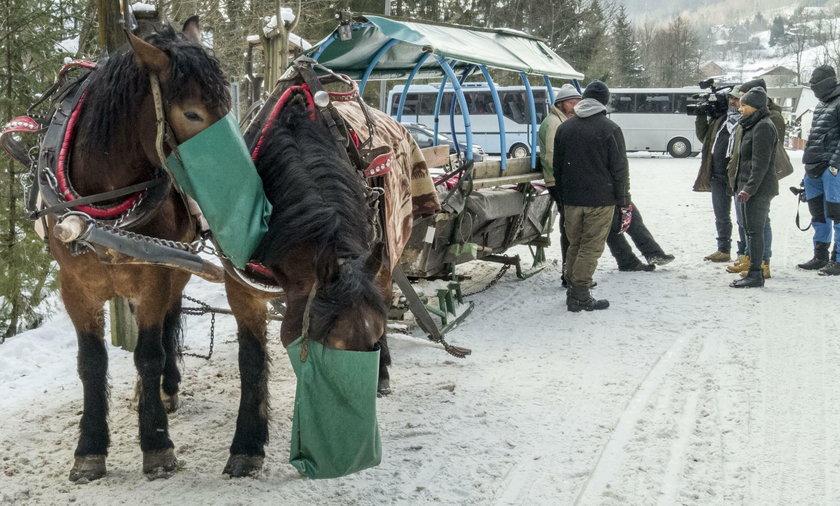 Konie górali dostaną karty pracy
