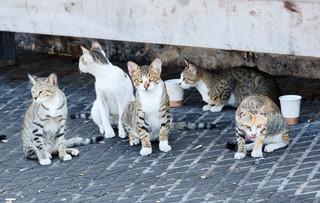 Czy mamy obowiązek pomagać miejskim kotom?