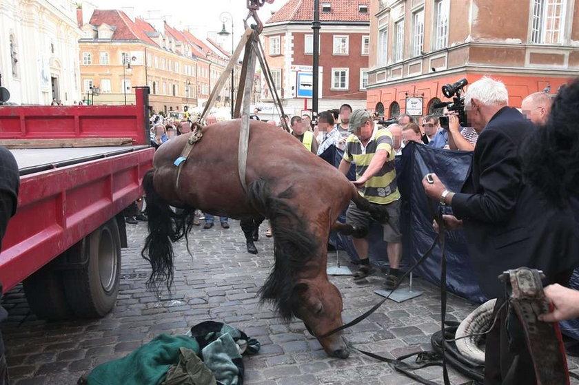 Koń padł na warszawskiej Starówce. Film