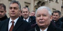 """Orban zdradzi Kaczyńskiego?! """"Może dogadać się z największym wrogiem prezesa PiS"""""""