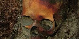Przestrzelona czaszka kobiety w lesie pod Toporowem