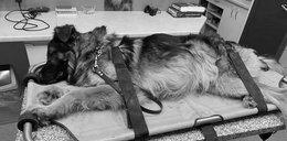 Właściciel okrutnie potraktował konającego psa