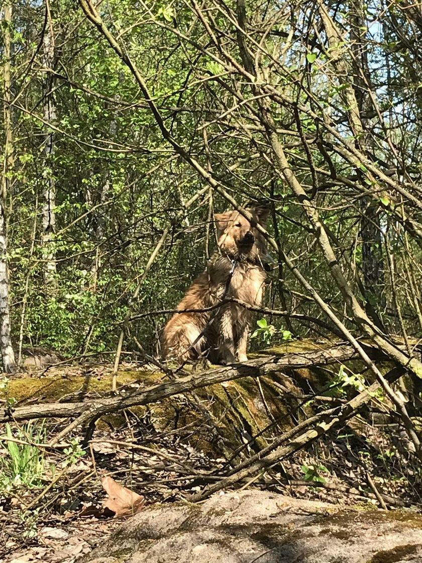 Maksa porzucono w lesie! Prokuratura nie ukarała właściciela!