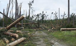 Lasy Państwowe: Uprzątanie terenów dotkniętych nawałnicami potrwa do 2019 roku