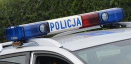 Policja bada makabryczną sprawę. Co się stało kotom w Siedlcach?