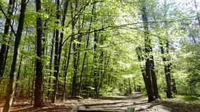 Protest przeciwko wycince drzew. Prezydent: to jedna z czynności pielęgnacyjnych lasów
