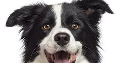 Nie dostaniesz mandatu za psa bez smyczy?