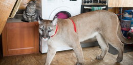 Specjalista o Projekcie Puma: to manipulacja, łamanie psychiki Nubii