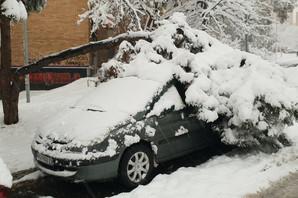 SIBIRSKI FENOMEN U BEOGRADU Drveće pucalo pod pritiskom snega i LOMILO VOZILA, dramatične scene širom Srbije (FOTO)