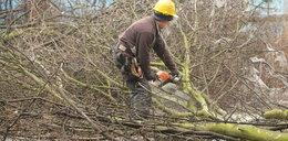 Nowe absurdy dotyczące wycinania drzew