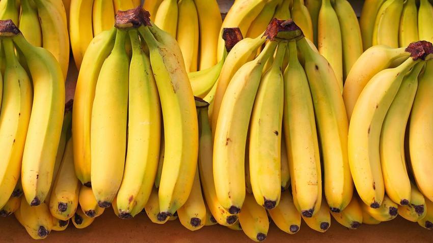Znalazł W Bananach Jadowitego Pająka