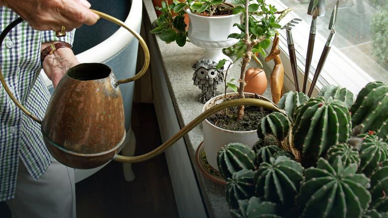 Jak w marcu dbać o rośliny domowe?